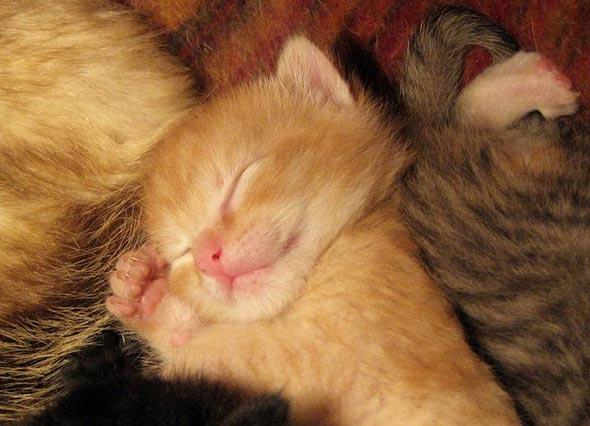 newborn orange tabby kitten