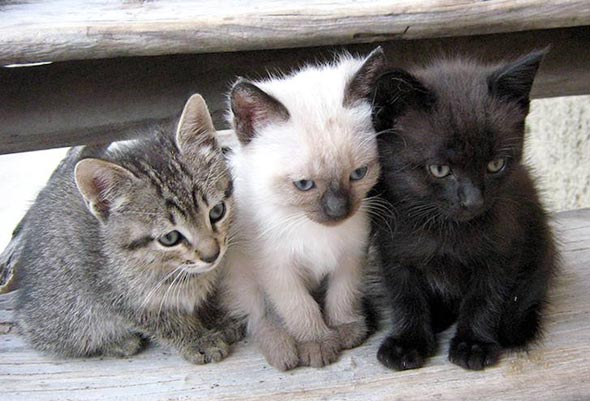 Momo, Toby, and Yuki [5] kitten