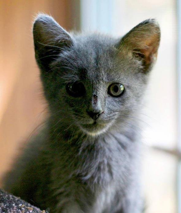 Jinx [5] kitten