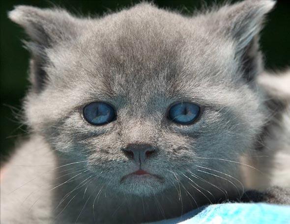 Angel's Little Boy Max [5]  kitten