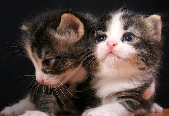 Oreo's Kittens [5]  kitten