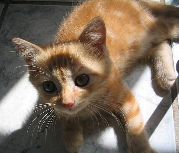 Nina [3] kitten