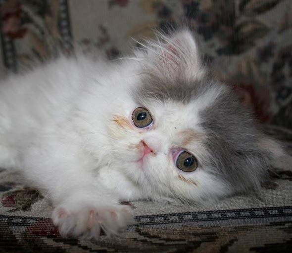 Winny [6] kitten