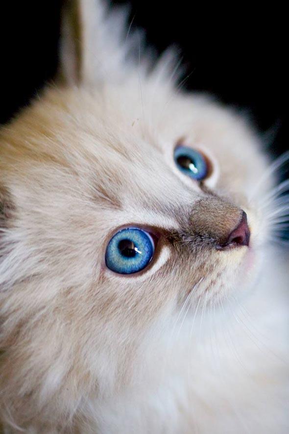 Dingus  kitten