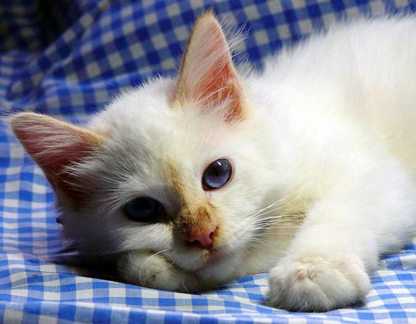 Milky [4] kitten
