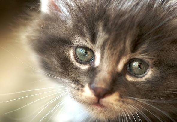 Alesha [5]  kitten