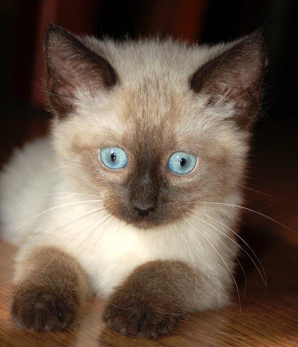 Hazel [6] kitten