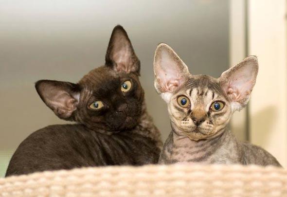 Jax and Sia [5]  kitten