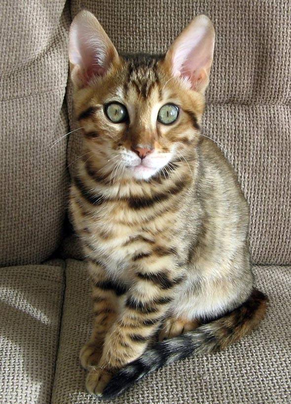 Rover [3] kitten