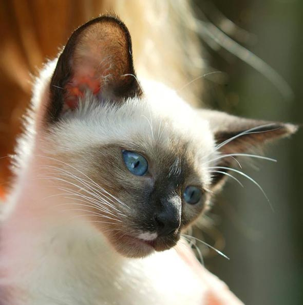 Zeke [4] kitten