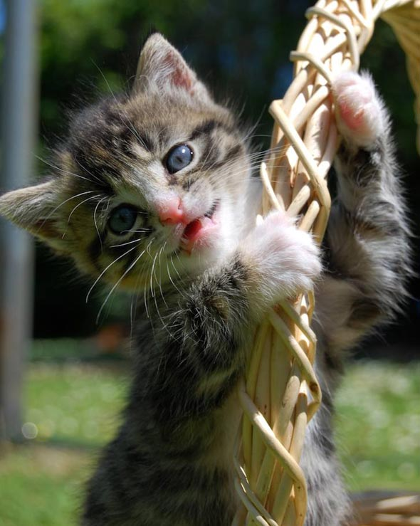 Violet  kitten