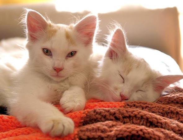 Five Former Feral Feline Fosters multiple kittens kitten