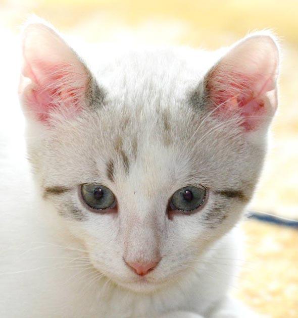Bandit [5]  kitten