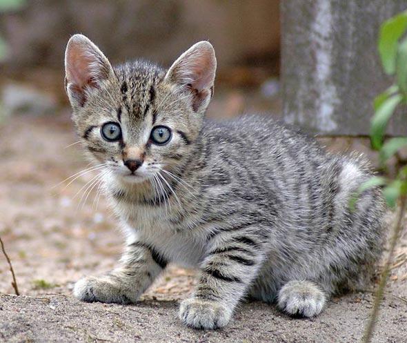 Stray Kitten in Slovakia tabby kitten