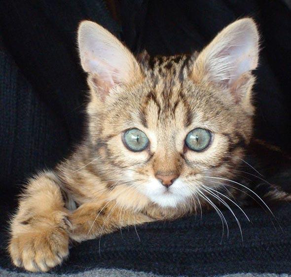 Baby Kitty [6]  kitten