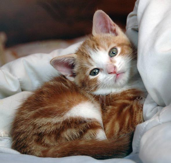 Sophia [6] kitten