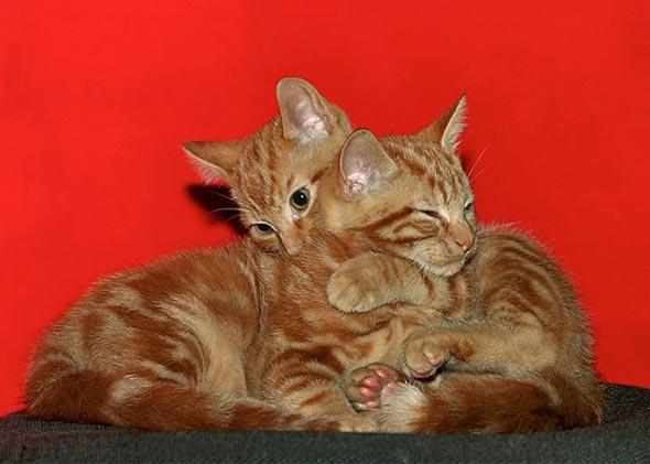 Pluk and Spook [5]  kitten