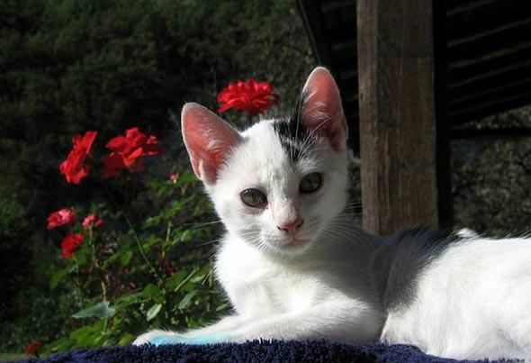 Richard Gere [6] kitten