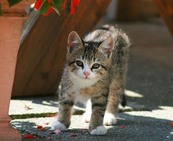 Sunny [6] kitten