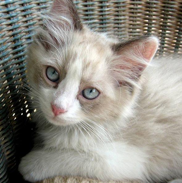Jaxson [6]  kitten