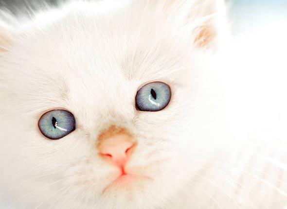 A Tale of Six Kittens Pt. 3: Avalanche [3] kitten