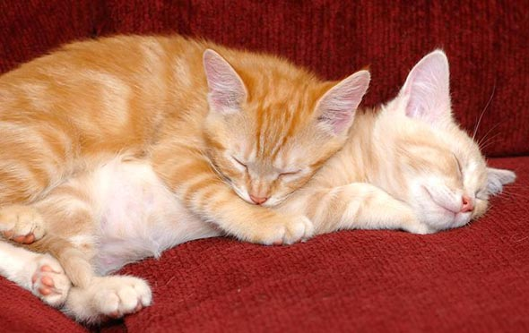 A Tale of Six Kittens Pt. 4: Rusty and Peep [3] kitten