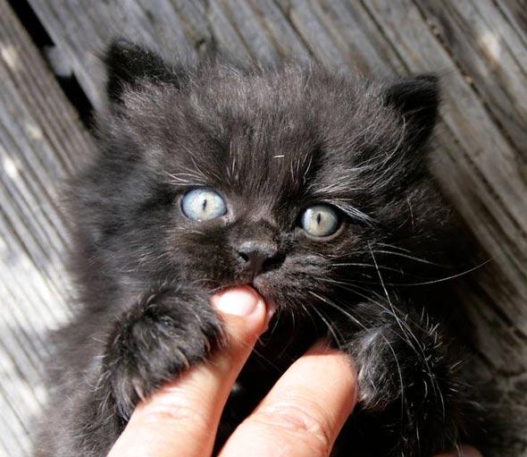 Charly [3] kitten