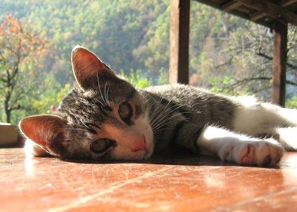George Clooney  kitten