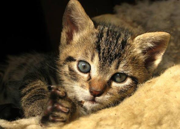 Sanja's New Kitten tabby kitten