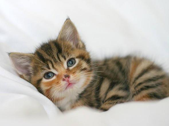 Daisy  kitten