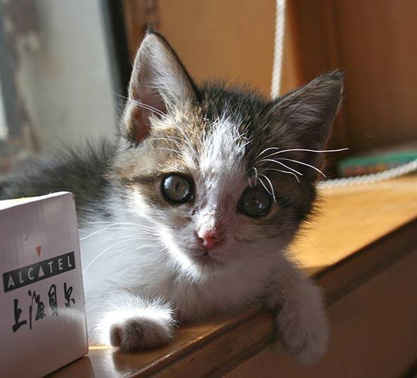 Ramizan [4] kitten
