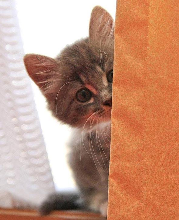 Smudge [5]  kitten