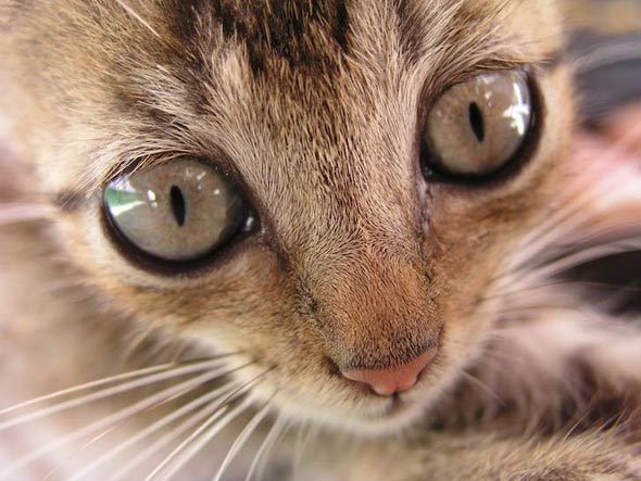 Kitten in Nicaragua [5] kitten