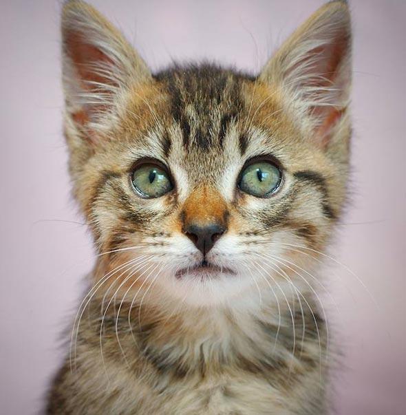 Kobe  kitten