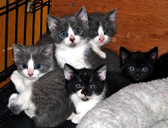 kitten481_12.jpg
