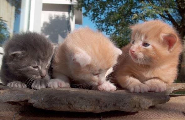 Dýri, Fidel Castro, and Lenni [3] kitten