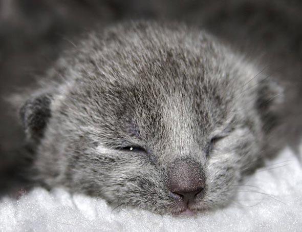 Sacha [3] kitten