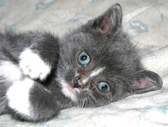 Tubby [4] kitten