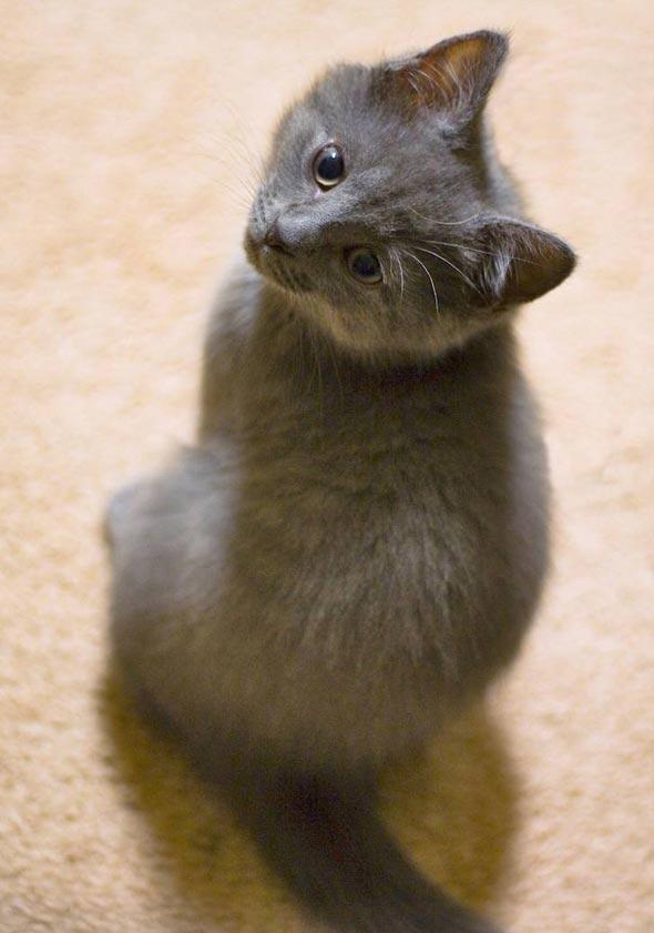 Hiro [4] kitten