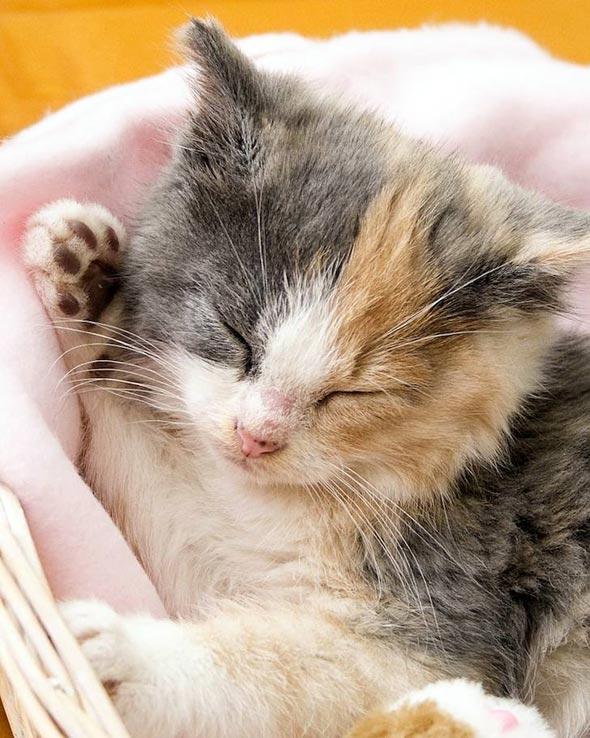 Twila [4] kitten