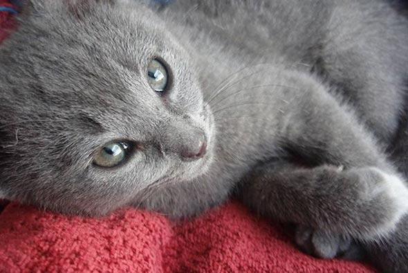 Cassie [5] kitten