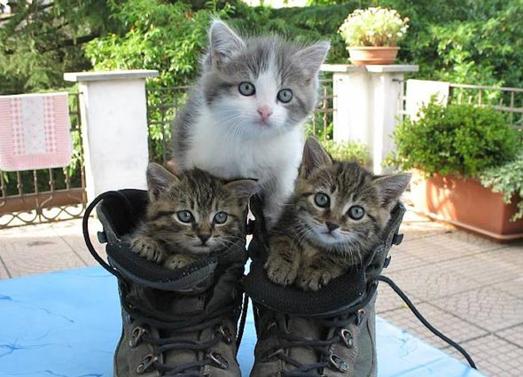 Tutta la Famiglia! [4]  kitten