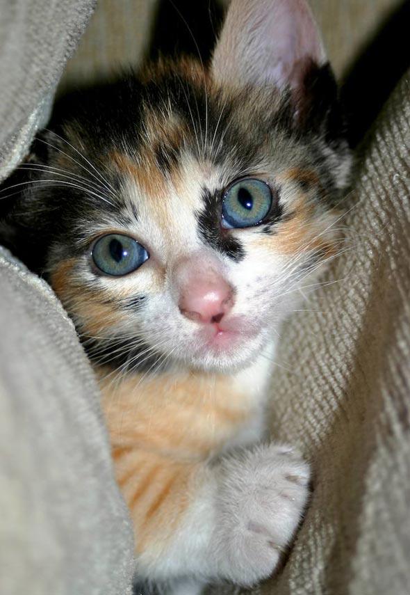 Sasha's Baby Girl Akira [4]  kitten