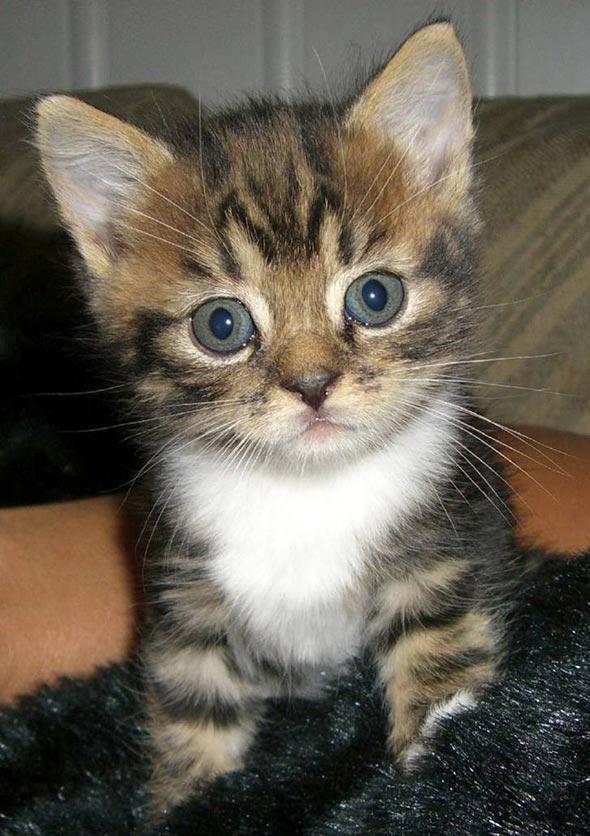 Mio [5]  kitten