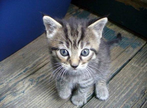 Gizmo [4]  kitten