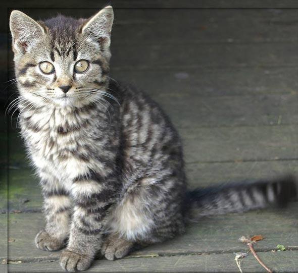 Farm Kitten in Sweden [5] kitten