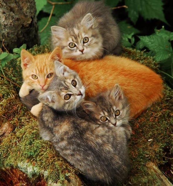 Feral Kittens in Alaska [4] kitten
