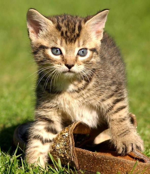Harvey [3] kitten