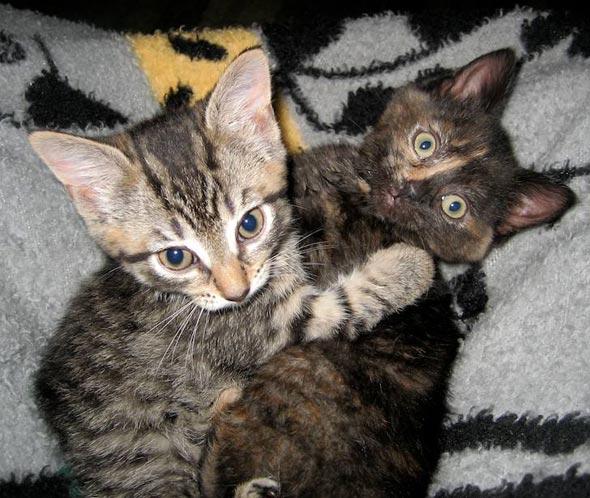 Daisy and Star [4] kitten