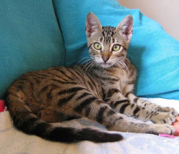 Kitten in Portugal [5]  kitten